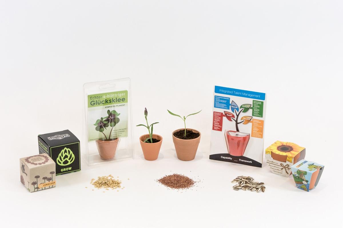 Seed Grow Kits