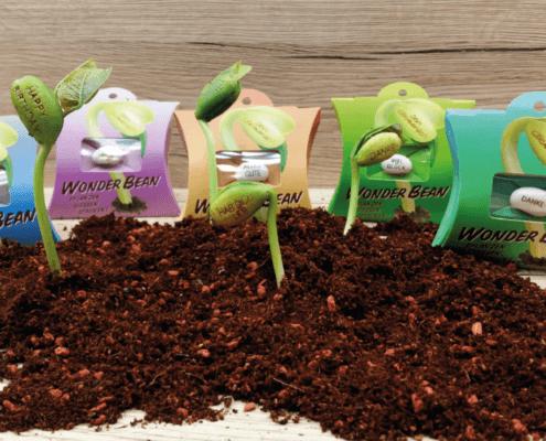 Wonder Bean - Growing Plants