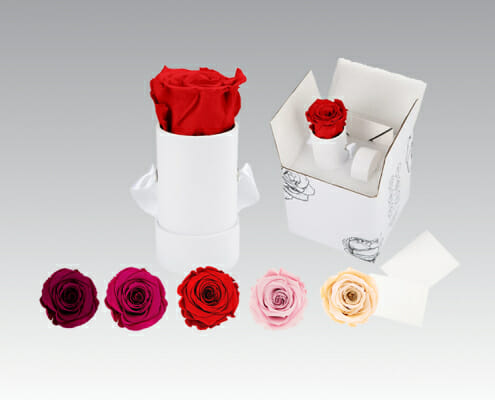 Infinity Roses - Colour Range