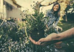 Gardening Improves Mental Health